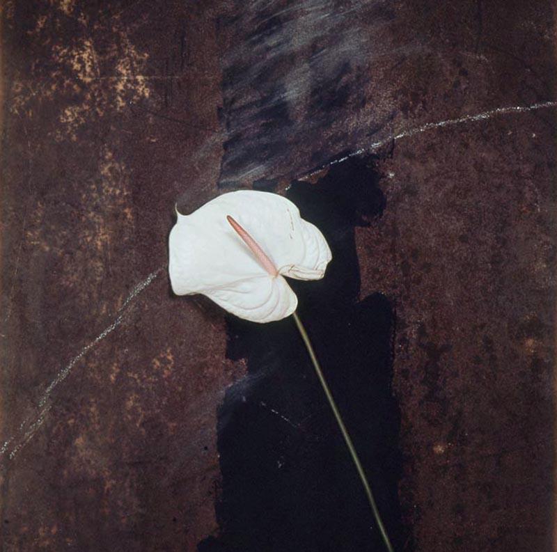Pola-Flowers